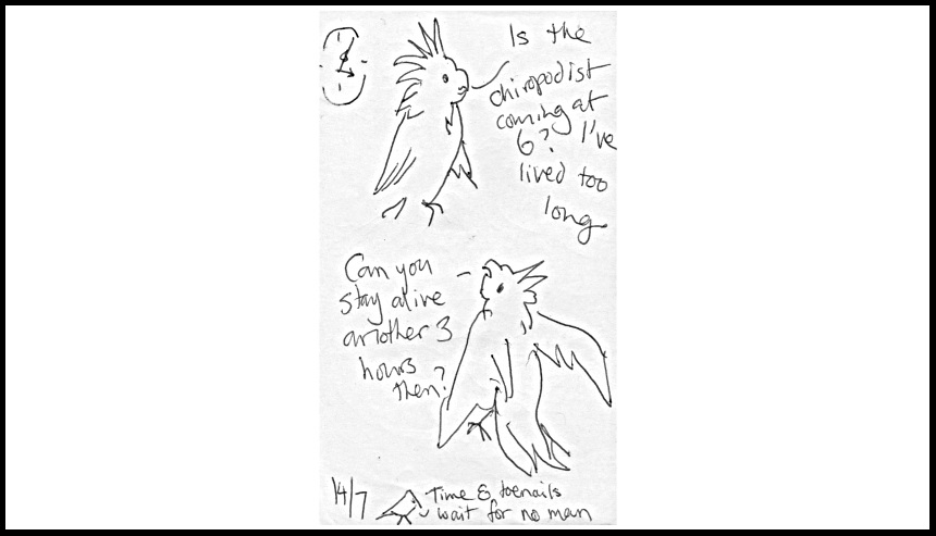 An illustration from Conversations with Cockatoos