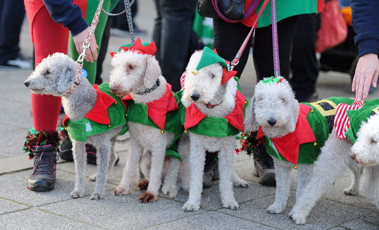 Elf Dogs Newcastle