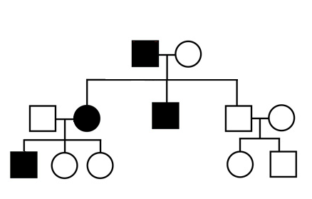 Family tree showing genetic inheritance
