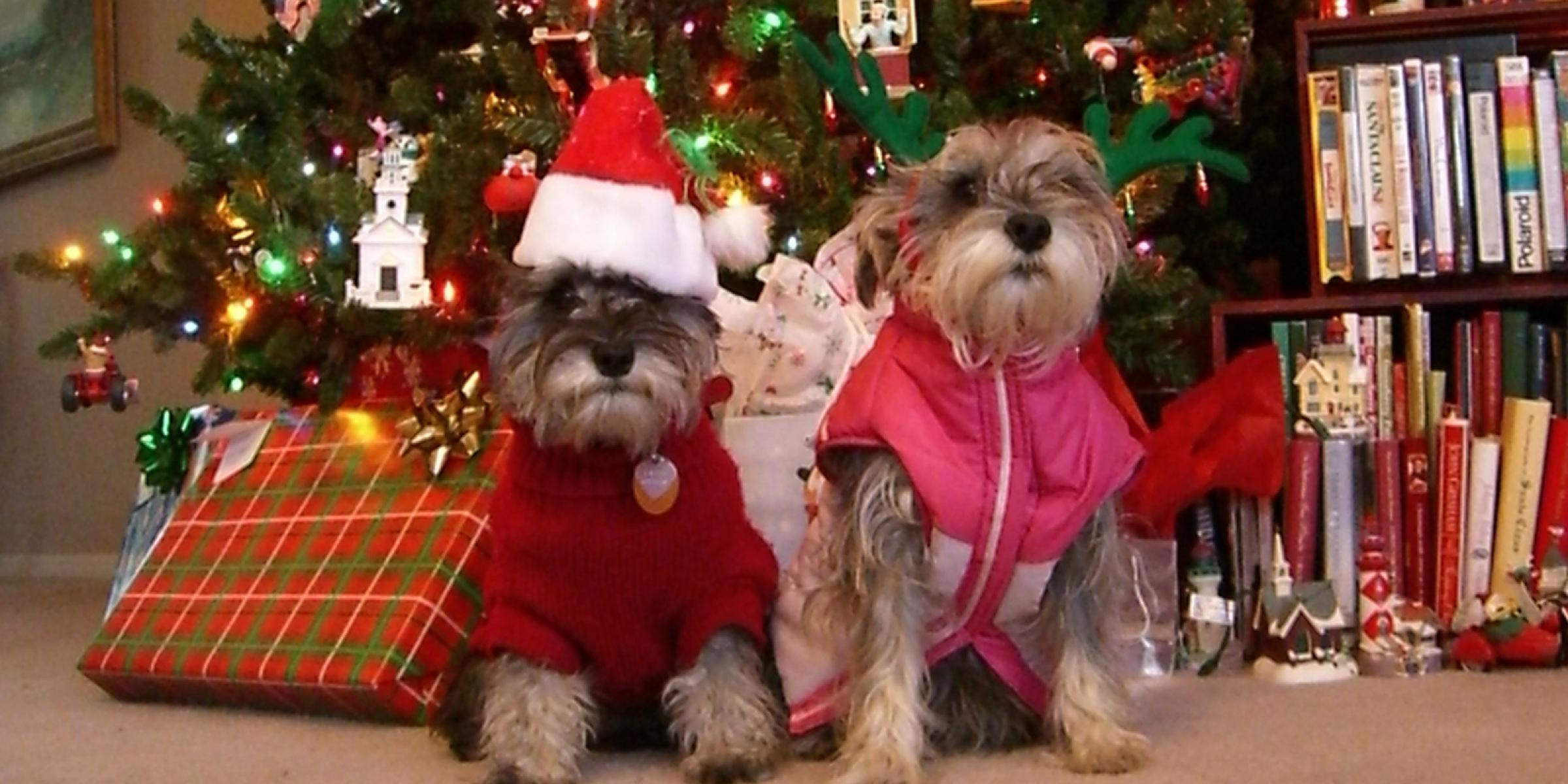 A family's pet dogs dressed up for Christmas